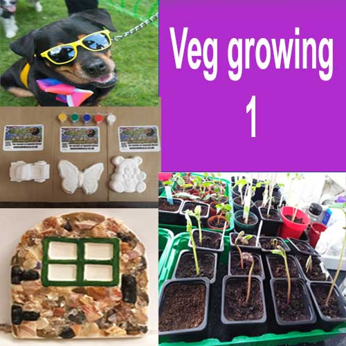 Growing Vegi Seeds (G1)